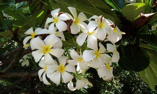 Χίλο, Χαβάη: Hilo gardens