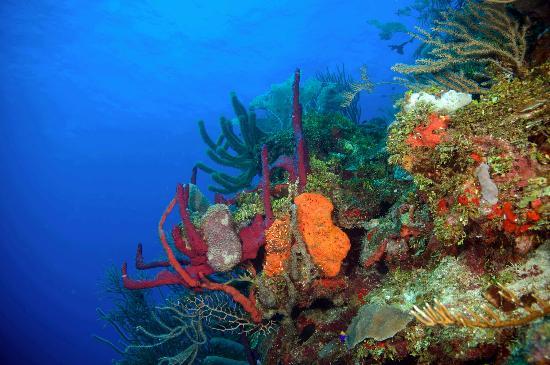 Mayan Princess Beach & Dive Resort: Great reef walls