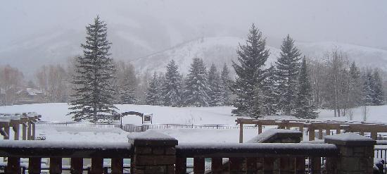 Winter Scene in the Spring