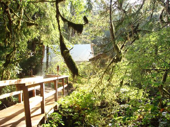 Clayoquot Wilderness Resort: The walkway to our tent