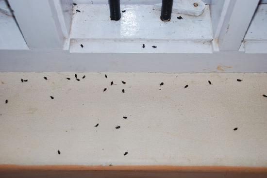 The Dead Bugs On The Window Sill In The Morning Picture Of