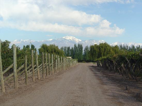 Cavas Wine Lodge : The vineyards