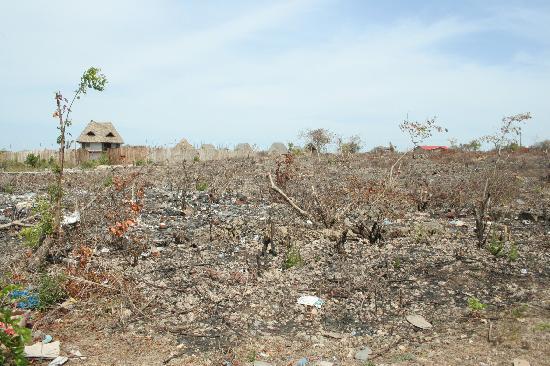 Nungwi, Tanzania: l'isola delle spezie!!!!!,