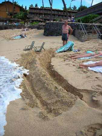 Kahana Sunset: Had to dig a ditch to protect sunbathers - short beach!