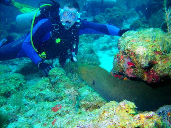 Fantasy Island Beach Resort: Moray Eel