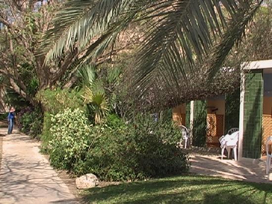 Kibbutz Ein Gedi Country Hotel : Garten 01