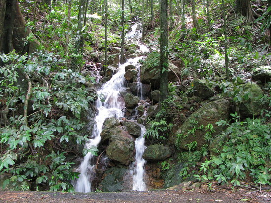 Cape Tribulation, Australië: waterfall next to road
