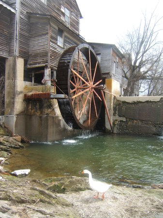 ‪‪Gatlinburg‬, ‪Tennessee‬: old mill duck‬