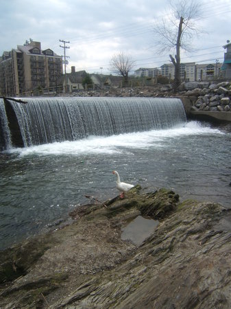 Gatlinburg, TN: old mill duck