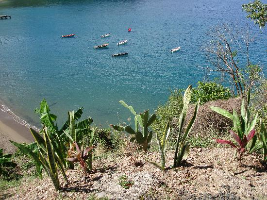 St. Lucia: Cactus growing on the mountain side