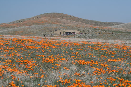 Antelope Valley California Poppy Reserve: Visitors center