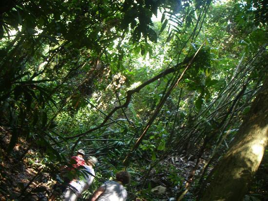Temenggor Lake: discovery island holiday
