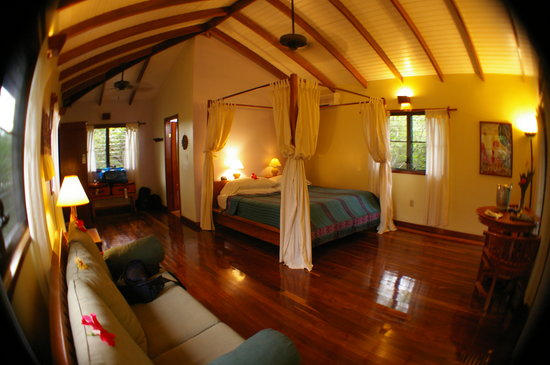 Hamanasi Adventure and Dive Resort: our tree top bungalow