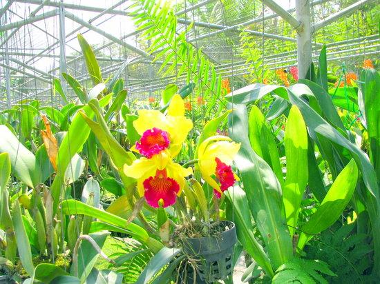 清迈湄沙兰花园