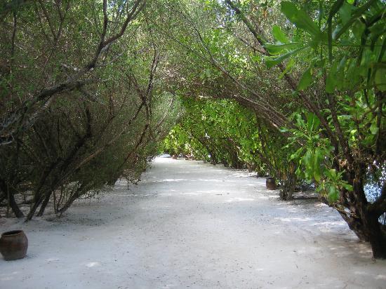 Anantara Veli Maldives Resort: Walk way to our bungalow