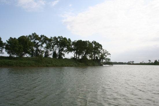 Veracruz, México: Región selvática en la Isla