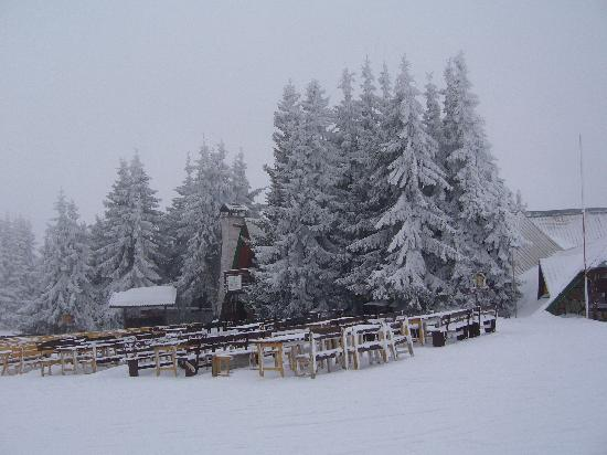 Pamporovo Ski Resort: Snowy and tree lined