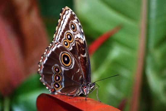 White River Gardens: butterfly garden