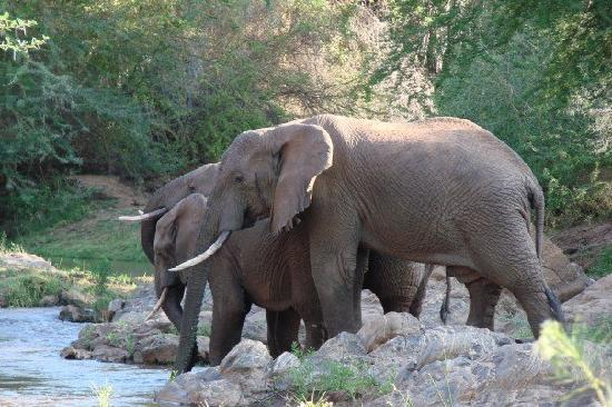 Tsavo, Κένυα: Thirsty elephants....