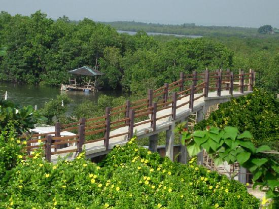 ALTA Cebu Resort : The Bridge to the Riverside