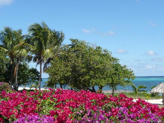 Club St. Croix Beach and Tennis Resort: Club St. Croix Flowers