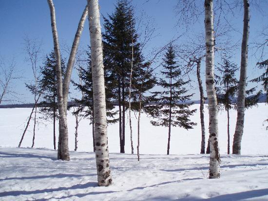 The Birches Resort照片