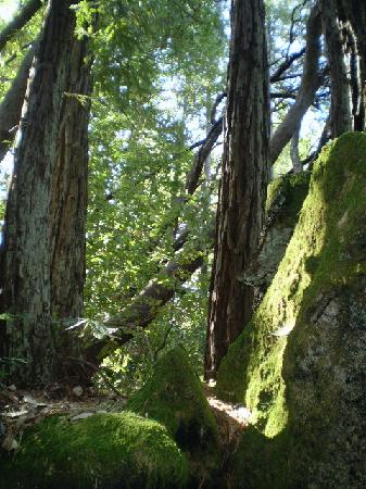 Redwood Croft: morning light
