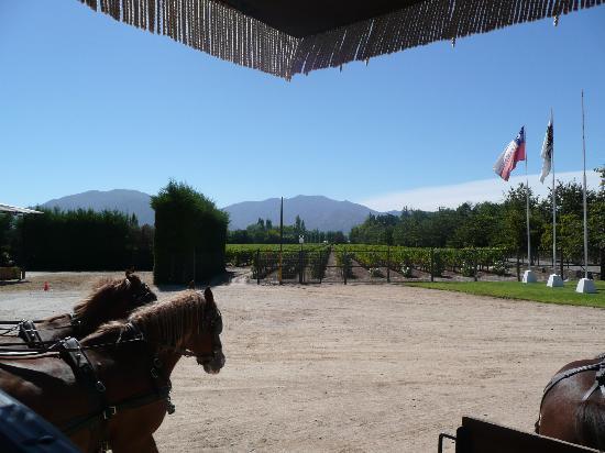 Santa Cruz, Chili : The vineyards