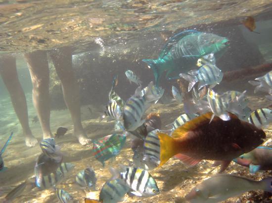 Halomy Hotel : fish at base of steps