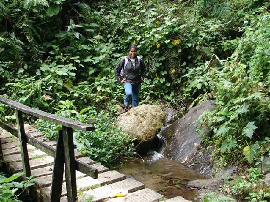 Sendero Los Quetzales (The Quetzales Trail): Lush Foliage