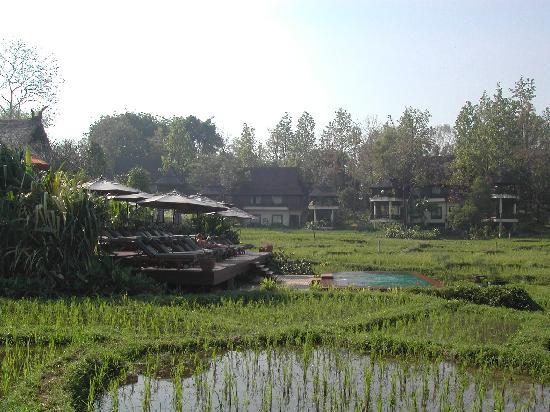 Lana Thai Villa: Adult pool set among rice patties.
