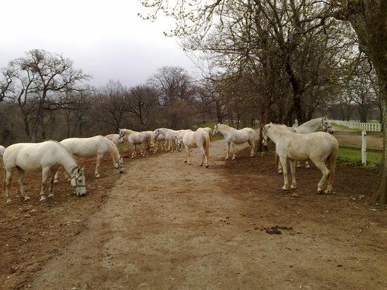 Lipica Stud Farm (Kobilarna Lipica)