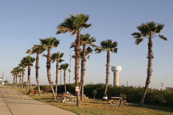 Plantation Suites: picnic area