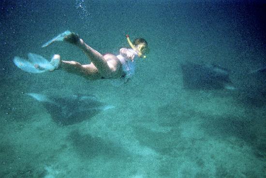 Mirihi Island Resort : Flying with manta's...