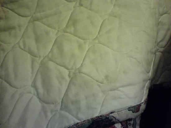 دايز إن - جوليتسفيل: Unclean Bedspread