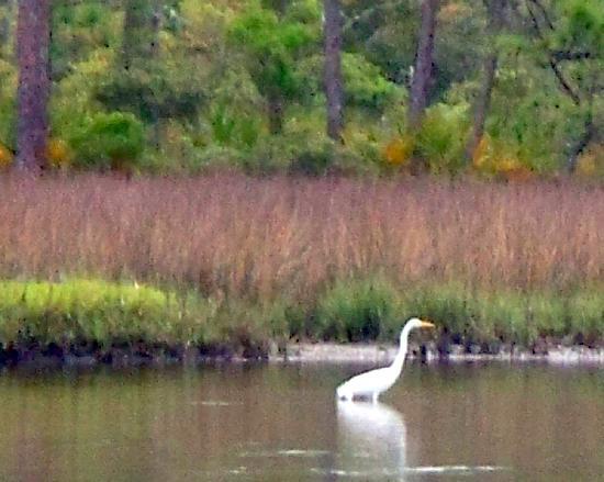 Cape San Blas Inn: Egret seen in the bay