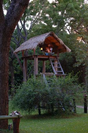 Amaya Lake - Flute player's perch on the tree top