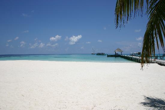 Mirihi Island Resort : Beach
