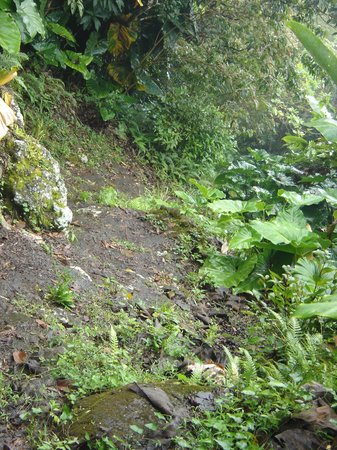 Windwardside, Isla de Saba: Mt. Scenery trail