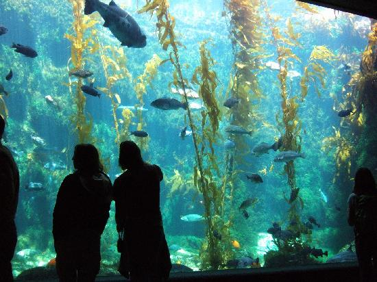 Dining Area Food Available Picture Of Birch Aquarium At