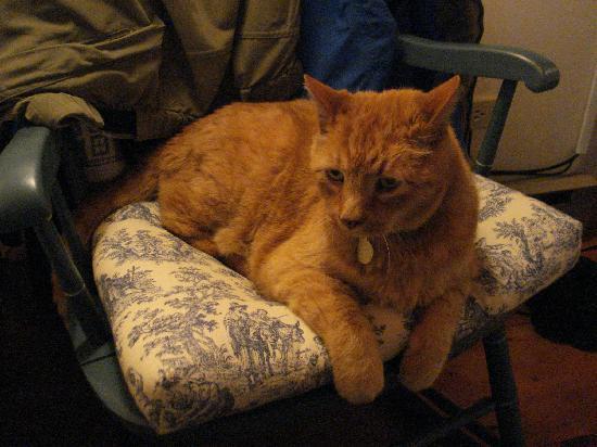 Seven Sea Street Inn: Puddy - the Seven Sea Street cat