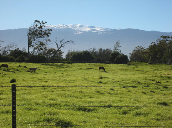 Kamuela, Hawaï : Snow on Mauna Kea from Parker Ranch