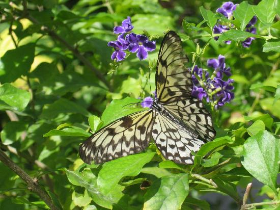 Aruba Beach Villas: Don't miss the Butterfly Farm 10 minutes away