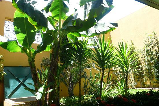 Hotel Casa do Amarelindo: jardin intérieur