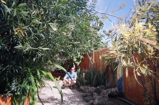 Coco Palm Garden & Casa Oleander: Down the path toward our apartment