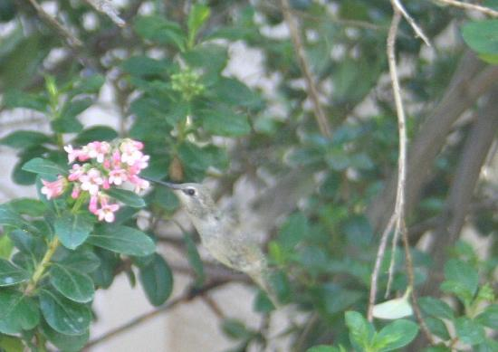 Candy Cane Inn: Even the hummingbirds loved it.
