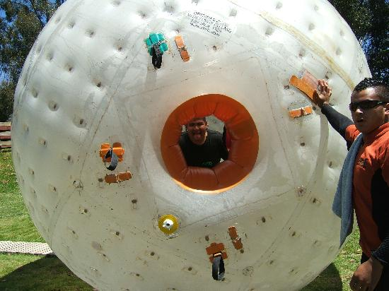 Zorb Rotorua: The kids(Teens actually) said it was the highlight of the trip