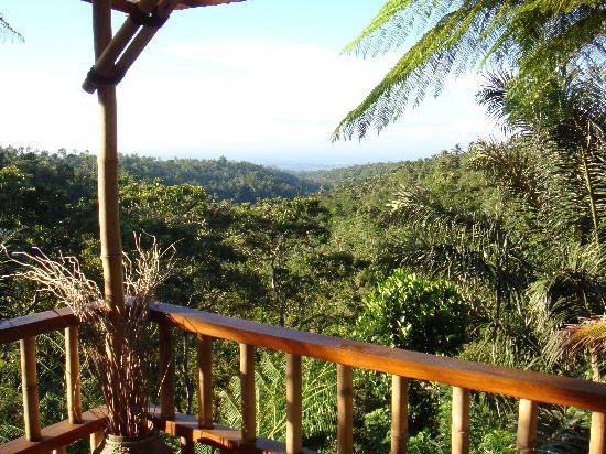Sarinbuana Eco Lodge: Morning views on the verandah