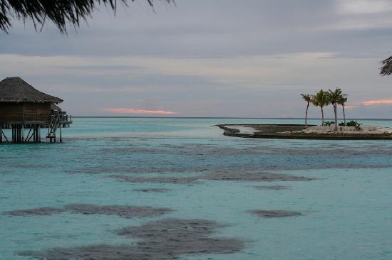 Anantara Veli Maldives Resort: Coral outside the room