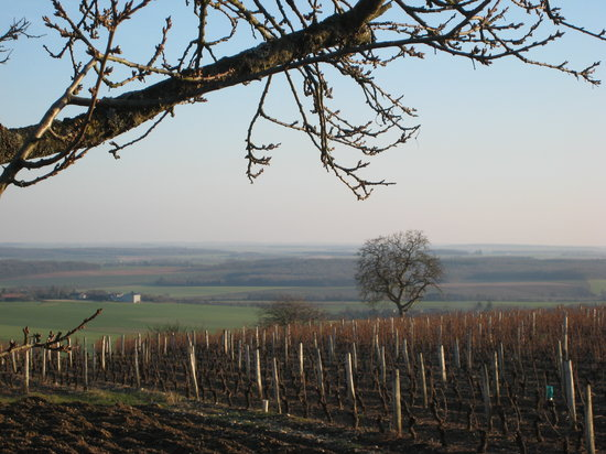 Cosne-Cours-sur-Loire, Francja: Even in winter, the vineyards are still breathtaking